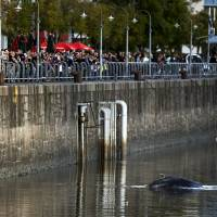 Whale strays into upscale Buenos Aires harbor, delighting onlookers