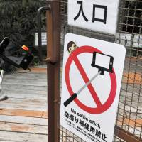 A sign telling visitors to refrain from using selfie sticks is posted in an area where monkeys roam free at Japan Monkey Center in Inuyama, Aichi Prefecture. | CHUNICHI SHIMBUN