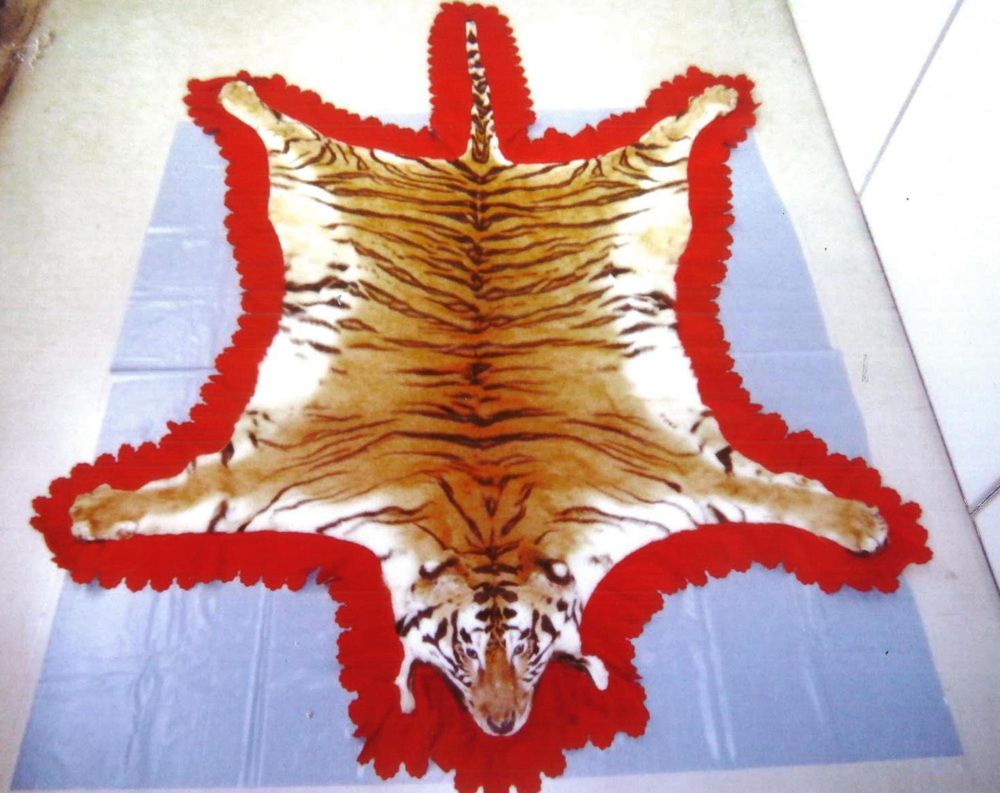 A processed tiger pelt is auctioned on the Internet. Police are intensifying efforts to crack down on illegal trade of items from endangered species.   NPA/KYODO