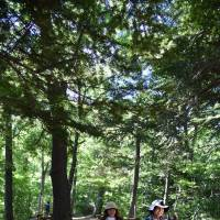 Mount Takao attracts many hikers, young and old, even on weekdays. | SATOKO KAWASAKI