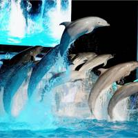 Dolphins perform during a night show at the Adventure World zoo and aquarium in Shirahama, Wakayama Prefecture, on Saturday. | KYODO