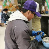 A Chinese technical intern, who came to Japan under the government-backed foreign traineeship program, works at an oyster processing factory in Hiroshima Prefecture in March. | KYODO