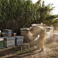 Tale of Tuscan beekeeping and family breakdown has a sting
