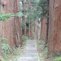 Towering sugi (Japanese cedar) trees line the Mount Haguro hiking path. | DAVEY YOUNG