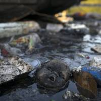 WHO, sailing body want to test for viruses in Rio's Olympic waters