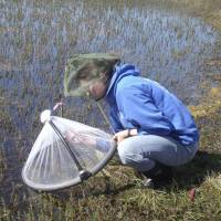 In warming Arctic, mosquitoes may multiply