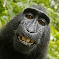 Monkey that took selfie should get copyright: U.S. lawsuit