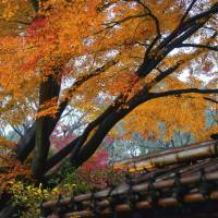 Autumn foliage in Rikugien Garden in the Komagome area of Tokyo's Bunkyo Ward. A think tank recently ranked the area the most 'sensuous' of the city. | ISTOCK