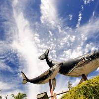 Giant whale models mark the entrance to the central part of Taiji,  Wakayama Prefecture. | ROBERT GILHOOLY