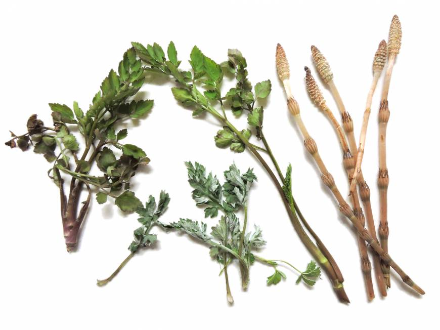 Feast from the forest: foraging for edible plants in Japan