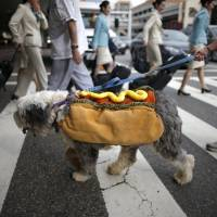 Big biz: Halloween just a calendar entry as popular social media pooches sport latest costumes