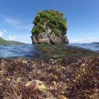This photo provided by the XL Catlin Seaview Survey, taken in December 2014, shows coral before bleaching in American Samoa. | AP