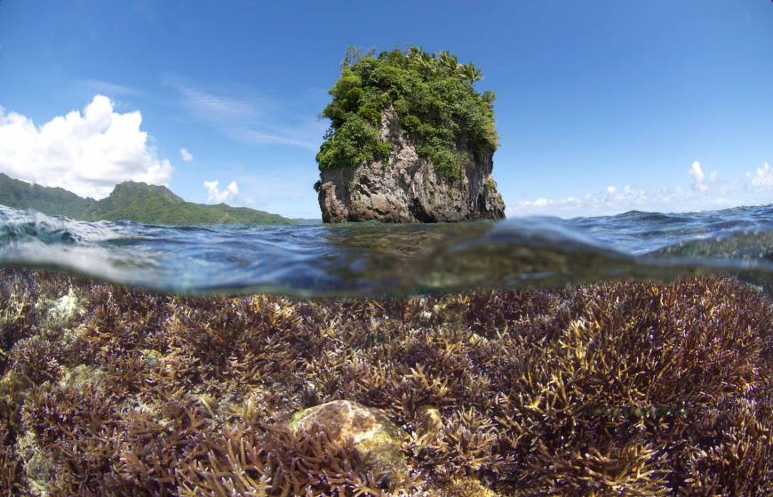 Ocean heat wave harming world's coral reefs this year: experts