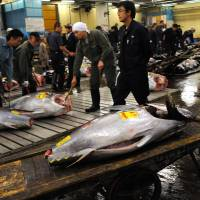 Workers prepare tuna for inspection prior to an auction at Tsukiji fish market | BLOOMBERG