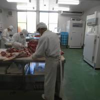 Fresh cut: Gibier no Sato employees process a deer that has been in cold storage for four days in the facility's final butchering and packing room. | NORIKO ABE