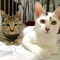 We are family: cats Tencha and Sencha
