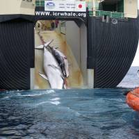 Japan to resume research whaling by end of year at earliest
