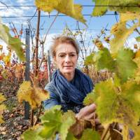 Bordeaux vineyards in bid to survive warming