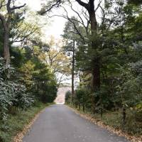 Want to escape the concrete jungle of Tokyo? Head to the actual forest of Meiji Shrine and Yoyogi Park, a welcome oasis in the capital. | MIINA YAMADA
