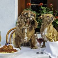 This Oct. 26 photo provided by Zola shows Toast (lef)t, a 10-year-old King Charles puppy mill rescue, and 7-year-old Finn in their 'Lady And The Tramp' photo taken at Mediterraneo Restaurant in New York. | ZOLA VIA AP