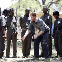 Prince Harry sees carcasses of poached rhino, calf in 'major killing field' South African park