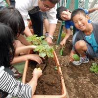 Dirty hands: Students at an elementary school in Tokyo's Sumida Ward plant balsam pear seeds in the school's garden. Planting fruit and vegetables is a common activity at many schools in Japan. | YOSHIAKI MIURA