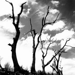 Scorched trees stand as reminders of the atomic bomb's destruction in Hiroshima. Neale writes in her notes about her father's few photos of Hiroshima: 'There was no public discussion of the rationale for dropping the bomb, because the Supreme Commander for the Allied Powers forbade publication of any material on the matter, but it would have been impossible not to have a deep personal response to the devastation and the plight of the Japanese people.' | DERRICK WOOLLACOTT