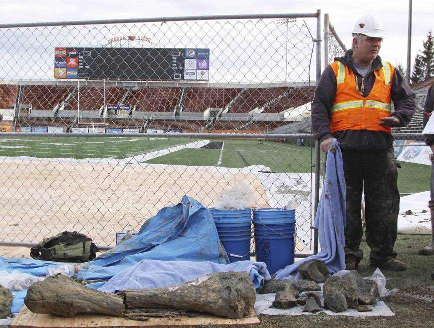 Mammoth bones found at Oregon State football field