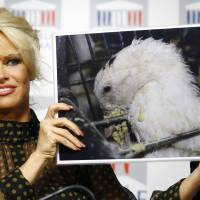 Pamela Anderson, actress and animals rights defender, displays photos during a news conference at the French National Assembly to protest the force-feeding of geese used in the production of foie gras, in ParisTuesday. | AP