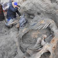 In this undated photo provided by researchers on Tuesday, volunteer Sergey Gorbunov works at the excavation site of a mammoth carcass in northern Russia's Siberia region near the Kara Sea. | AP