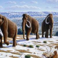 Woolly mammoths (Mammuthus primigenius), shown here in a late Pleistocene landscape in northern Spain in a 2004 National Geographic image by Alan Turner, were the last species of the genus. | MAURICIO ANTON, VIA WIKIMEDIA COMMONS / CC-BY-2.5