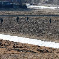 South Korean soldiers search for suspected North Korean leaflets in a field in the border city of Paju near the Demilitarized Zone dividing the two Koreas on Wednesday. | YONHAP / AFP-JIJI