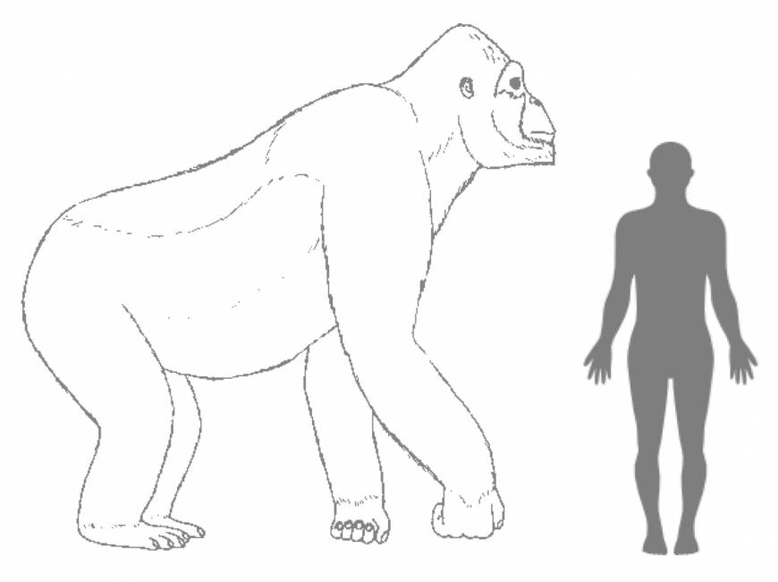 The real King Kong: Where it lived, what it ate, and why it may have gone extinct