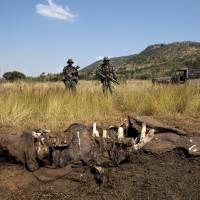 Members of the Pilanesberg National Park anti-poaching unit stand guard as conservationists and police investigate the scene of a rhino poaching incident in South Africa in April 2012. | REUTERS