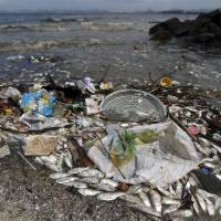 Dead fish lie on the shore of Guanabara Bay in Rio de JaneiroWednesday. Thousands of dead fish washed up on the shores not far from where events are being held at this year's Olympic Games, environmental officials said. | REUTERS