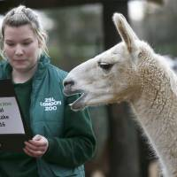 Down to the last bug as London Zoo starts annual critter count