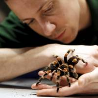 Keeper Jamie Mitchell poses with a Mexican Red-Kneed Tarantula during the stock take at London Zoo in London, Monday.   REUTERS
