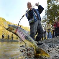 Kazunobu Kawanano catches a salmon using a traditional Ainu tool in a ceremony marking the new salmon season in Biratori, Hokkaido, in October. | KYODO