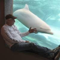A photo released by DolphinProject.com in September shows Ric O'Barry checking the status of Angel the dolphin at the Taiji Whale Museum in Taiji, Wakayama Prefecture.   AP
