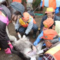 Nagano aims to educate with hunting skills course