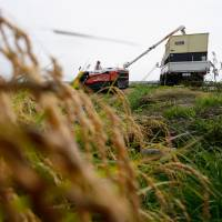 A farmer operating a combine harvester loads a truck with rice in a paddy in Katori, Chiba Prefecture, in September. | BLOOMBERG