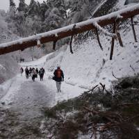 Employees from the Tobira Onsen Myojinkan inn evacuate on foot Saturday afternoon in Matsumoto, Nagano Prefecture, after rescuers cleared a walking path through the snow and trees. | COURTESY OF TOBIRA ONSEN MYOJINKAN INN / KYODO