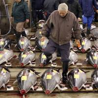 A prospective buyer inspects fresh tuna before the first auction of the year at the Tsukiji market in Tokyo on Tuesday. | AP