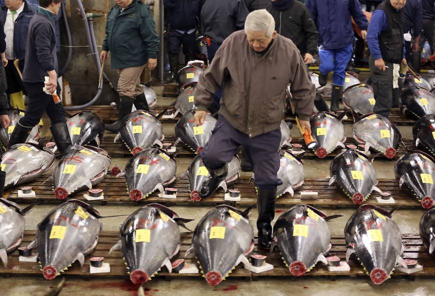 Bluefin fetches ¥14 million as Tsukiji fish market holds last start-of-year auction