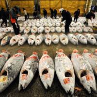 All at sea: Lack of regulations hurting tuna stocks