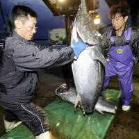 Fishermen unload a 100-kilogram Pacific bluefun tuna from a boat at Oma Port, Aomori Prefecture, in September 2008. | ROB GILHOOLY