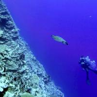 Diving in the Marshall Islands with fish, wrecks