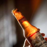 A man holds a bottle of Budweiser beer, brewed by AB InBev, in London in October. Asahi Group Holdings has offered to buy four European beer brands under SABMiller ahead of its mega-merger with AB InBev. | BLOOMBERG