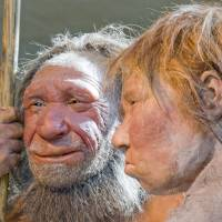Reconstructions of a Neanderthal man and woman are displayed at the Neanderthal Museum in Mettmann, Germany. | AP