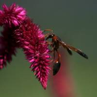 A wasp lands on a flower in a garden in Srinagar, India. | REUTERS